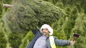shoppers size up whether to get a real or fake tree this christmas
