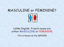french masculine or feminie