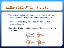 Eye Anatomy And Physiology Basic Anatomy U0026 Physiology Of The Eye Ppt Video Online Download