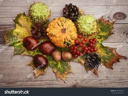 fall fruits autumn decoration leaves thanksgiving stock photo
