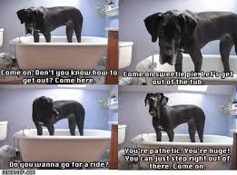 Great Dane Meme - great dane dog gif by cheezburger find share on giphy