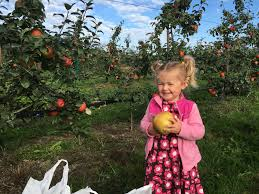 best apple picking orchards in washington state