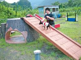 Dog Backyard Playground by Minnaegao Rakuten Global Market Large Ug Dg01a Dog Labo Dog Lab
