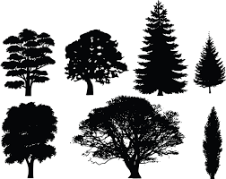 tree silhouettes and white tree clip art image of conifer