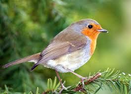 Birds In Your Backyard Ideas To Create A Backyard Bird Sanctuary Attracting Wild Birds