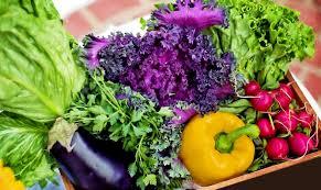 2016 garden talk container vegetable gardening enabling garden