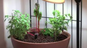small aquaponic indoor or patio mini garden youtube