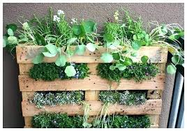 window herb harden kitchen window herbs full image for kitchen window hanging herb