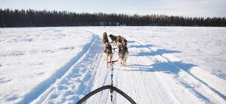 dallas seavey u0027s alaska sled dog tours willow dog sled rides