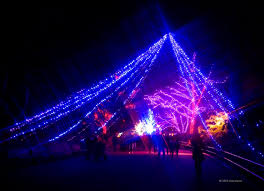 Zoo Light Dc by Relaxing Dc Discoveries