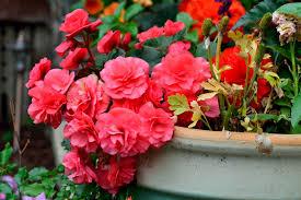 beautiful beautiful rose flower garden contemporary wedding