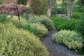 sacramento native plants garden photographer saxon holt explains the summer dry garden