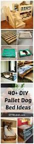 Upcycled Drawer Pet Bed Diy by Best 25 Diy Dog Bed Ideas On Pinterest Dog Beds Diy Projects