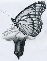 butterfly pencil drawing by finnhuman97 on deviantart
