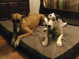 Dog Sofas For Large Dogs by Big Dog Beds Customer Pictures