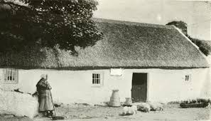 Thatched Cottage Ireland by Thatched Farm Cottage Woman Overseeing Piglets Feeding Cork