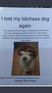 Lost Dog Meme - i lost my bitchass dog again dog humour meme funny pictures