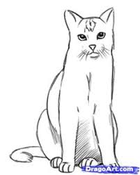how to draw a realistic cat step by step drawing tutorials for