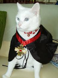 Halloween Costumes Cats Wear Submitted Halloween Pet Costumes Hgtv