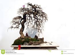 pot bonsai design pot bonsai design idimoodle org