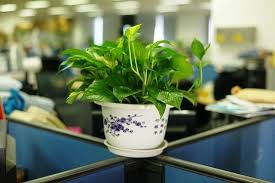 Small Desk Plants by Why And How You Should Personalize Your Work Desk Yourdost Blog