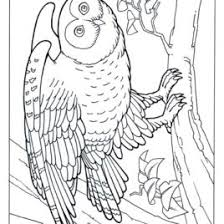 best photos of jungle trees coloring pages u2013 jungle scene coloring