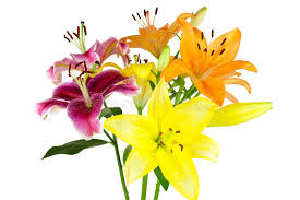 bouquet of lilies bouquet of lilies stock image image of isolated tropical 34530325
