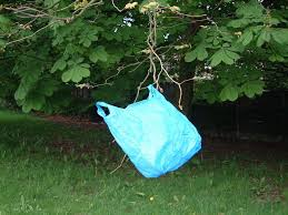 hilary turquoise bag in a tree the bigger picture manchester