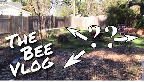 hive placement bee vlog 164 mar 8 2015 youtube