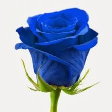 blue roses delivery blue roses is a bouquet of fresh cut flowers krokus is the best