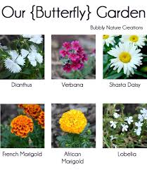 flowers for a butterfly garden like for more gardening