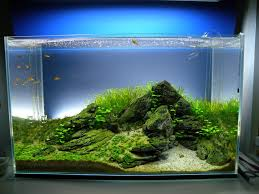 Aquascape Lighting 60x30x36cm Rimmless Starphire Page 2 Aquascaping World Forum