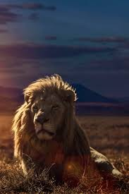 224 best lion of judah images on pinterest animals big cats and