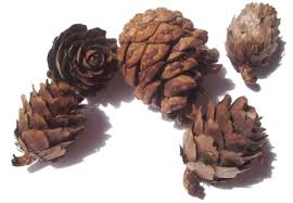 Pinecone 20 Creative Pine Cone Crafts Free Project Ideas Tipnut Com
