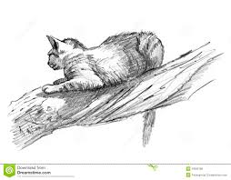 sand cat drawing sketch on a tree royalty free stock image image