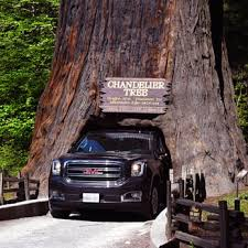 Chandelier Tree California Drive Thru Tree 230 Photos 120 Reviews Parks 67402 Drive