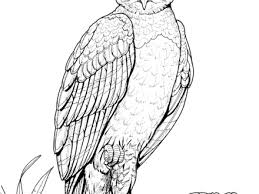 5 harpy eagle coloring page online free coloring pages for kids