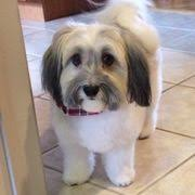 Creature Comforts Grooming Bark Place Of Ulster Pet Groomers 296 State Rte 299 Highland