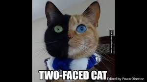 Cat Rainbow Meme - most adorable and funny cat memes so cute you will barf rainbows