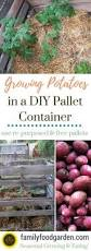 Container Gardening Potatoes - grow potatoes in containers to save space grow potatoes and