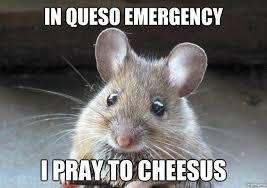 Cute Memes - cute mouse weknowmemes generator
