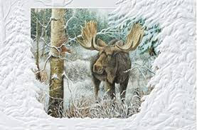 pumpernickel press wildlife cards encounter moose boxed christmas cards
