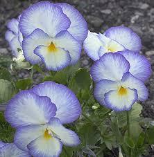 dillons floral 17 best helen dillon images on gardens dublin ireland