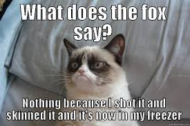 What Does The Fox Say Meme - what does the fox say grumpy cat what does the fox say nothing