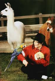 best 25 michael jackson neverland ideas on pinterest michael
