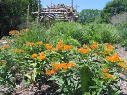 us native plants how to design a native plant garden dyck arboretum