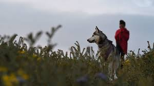 state with most dog owners 2016 dog owners have lower risk of cardiovascular disease swedish data