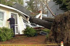 tree risk assessments abc consulting arborists spokane wa