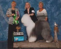 belgian sheepdog club of america national specialty oesca 2015 national specialty results
