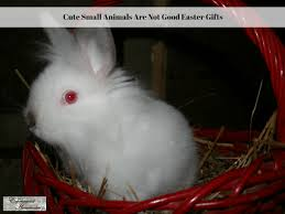 cute small animals are not good easter gifts experimental